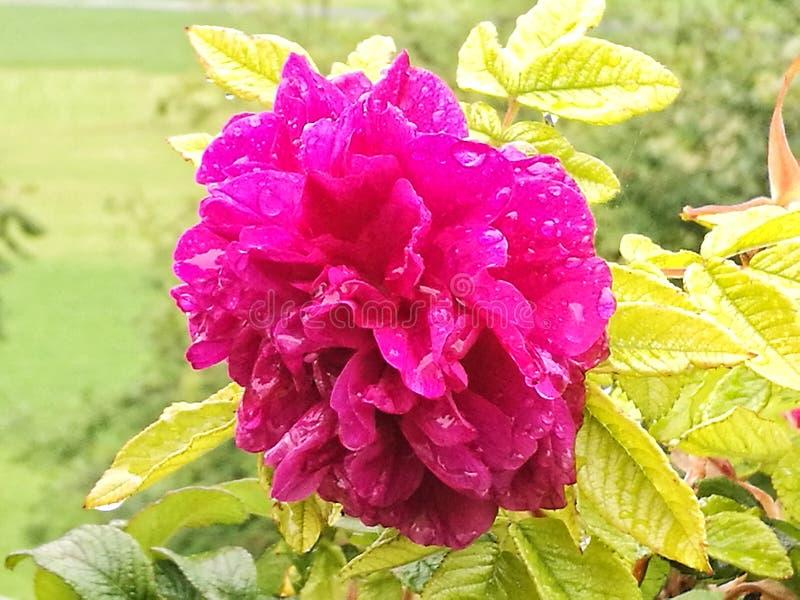 Blume unter dem Regen stockfotos