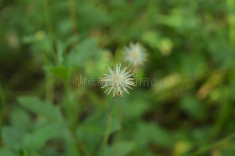 Blume view5 lizenzfreie stockfotos