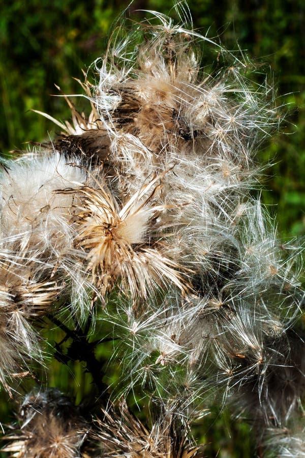 Blume von der nähsten Galaxie stockfotos