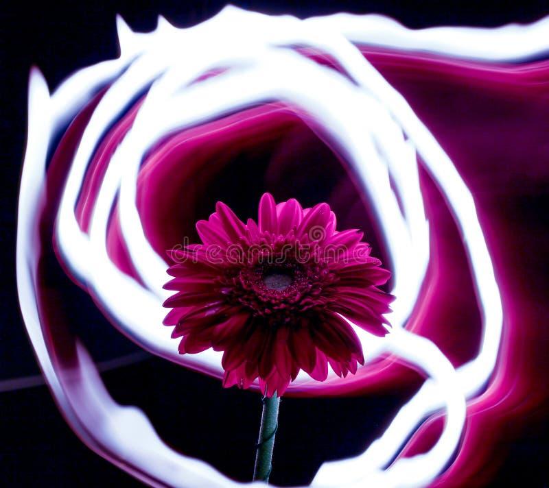 Blume von Feuerlinien, Blume auf einem Hintergrund von Feuerlinien, Neonblume stockfoto