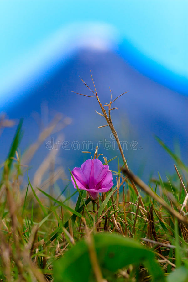 Blume vor einem Vulkan-Rauchen lizenzfreies stockfoto
