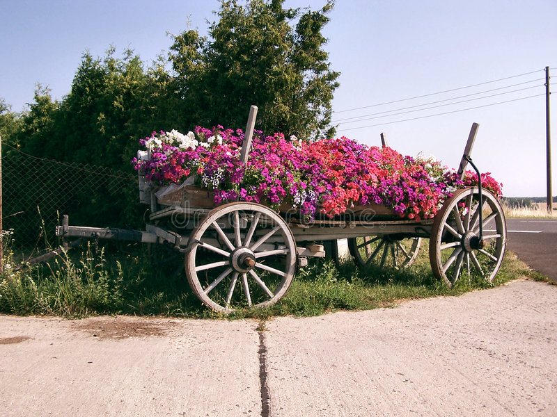 Blume-wagen Sie stockbilder