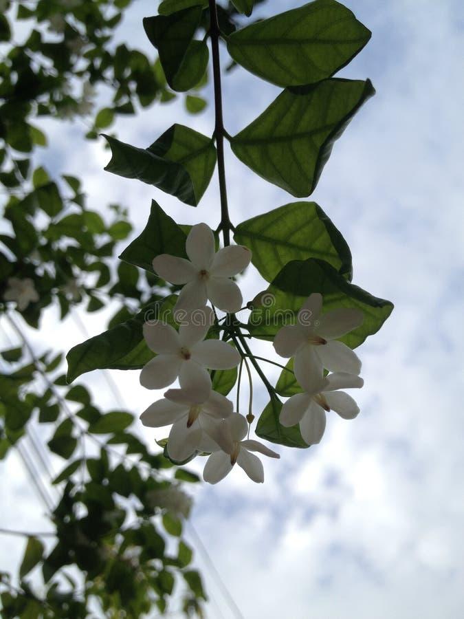 Blume zum Himmel stockfotos