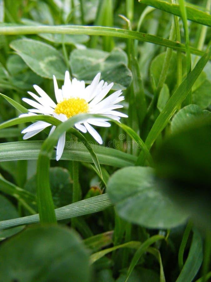 Blume zwischen Gras lizenzfreie stockfotos