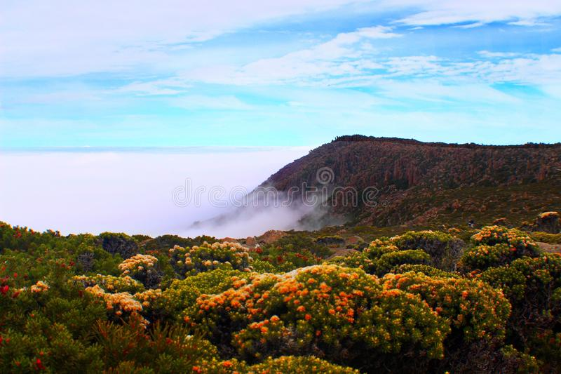 Blumen über den Wolken stockbild