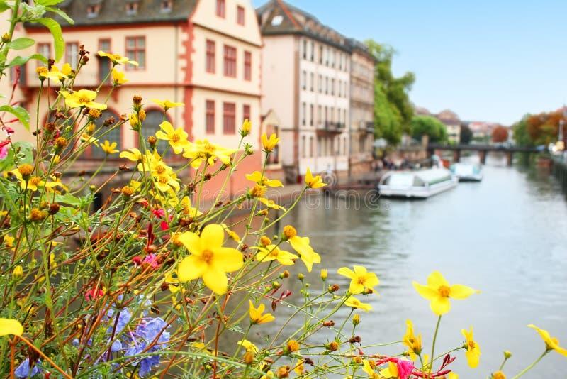 Blumen über Fluss lizenzfreie stockfotos