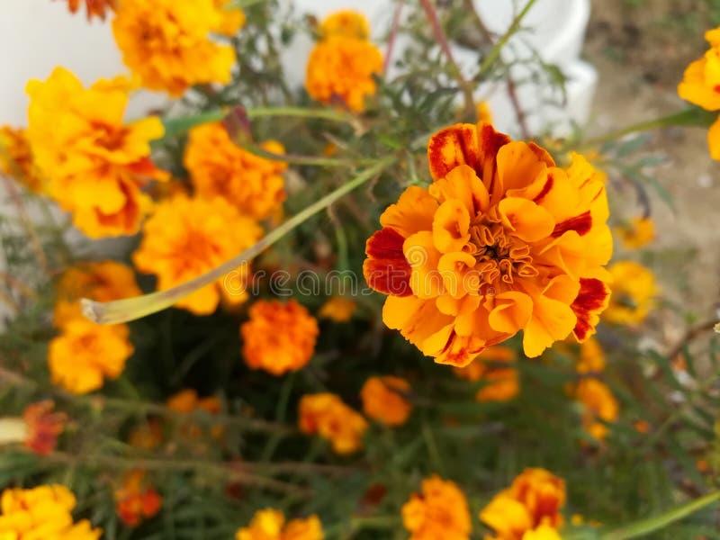 Blumen überall stockfotos
