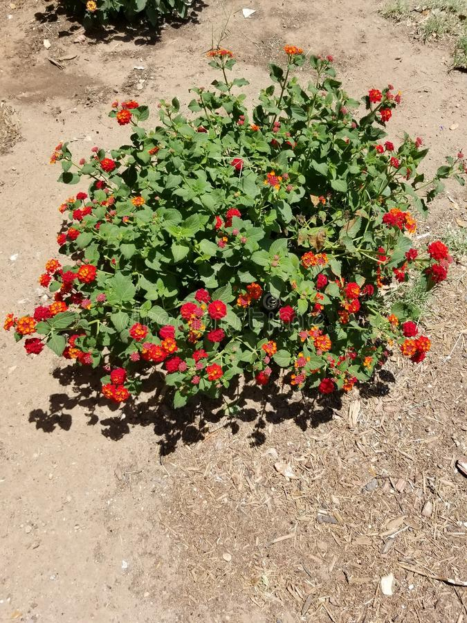 Blumen 2 lizenzfreie stockfotos
