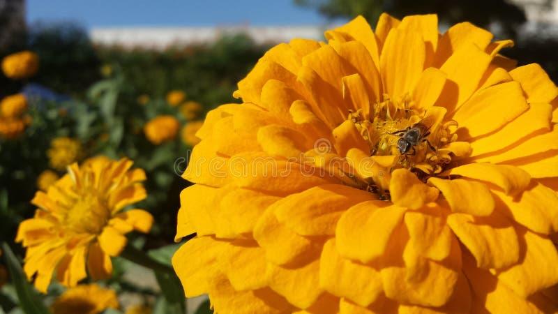 Blumen lizenzfreie stockfotos