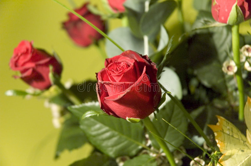 Blumen 7 lizenzfreie stockbilder