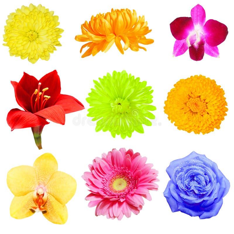 Download Blumen-Ansammlung stockfoto. Bild von sommer, bunt, floral - 9096478