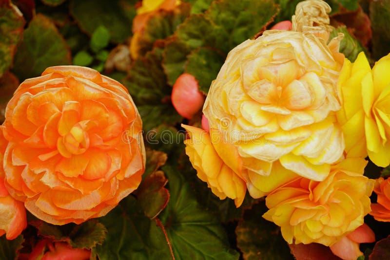 Blumen auf Carrickfergus-Schloss stockbild
