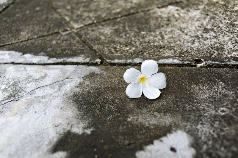Blumen auf dem Boden stockfotografie