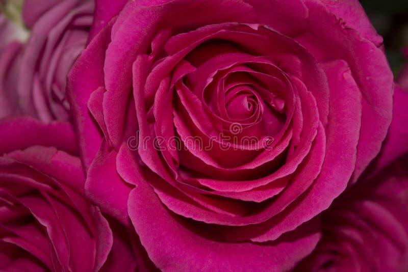 Blumen auf dem Fensterfoto lizenzfreie stockfotos