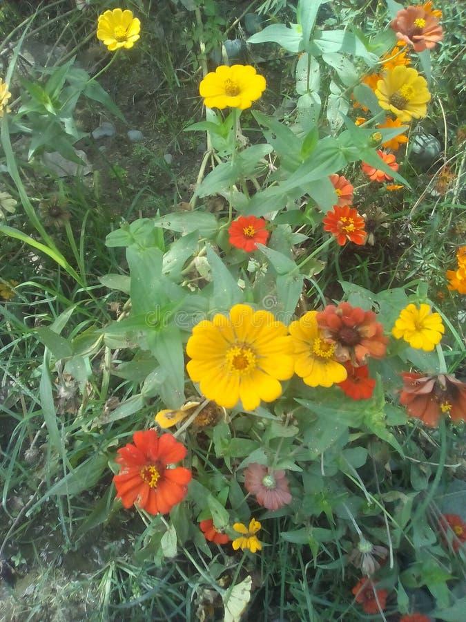 Blumen auf dem Gebiet stockbild