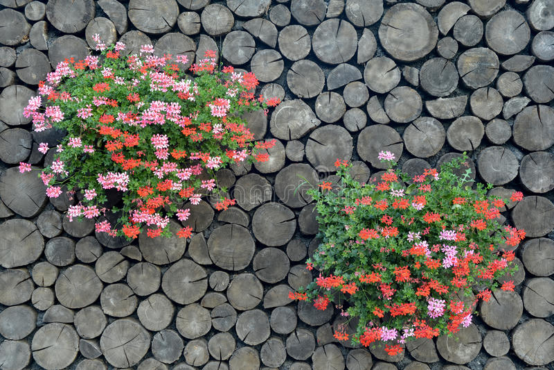 Blumen auf dem hölzernen Hintergrund lizenzfreies stockbild
