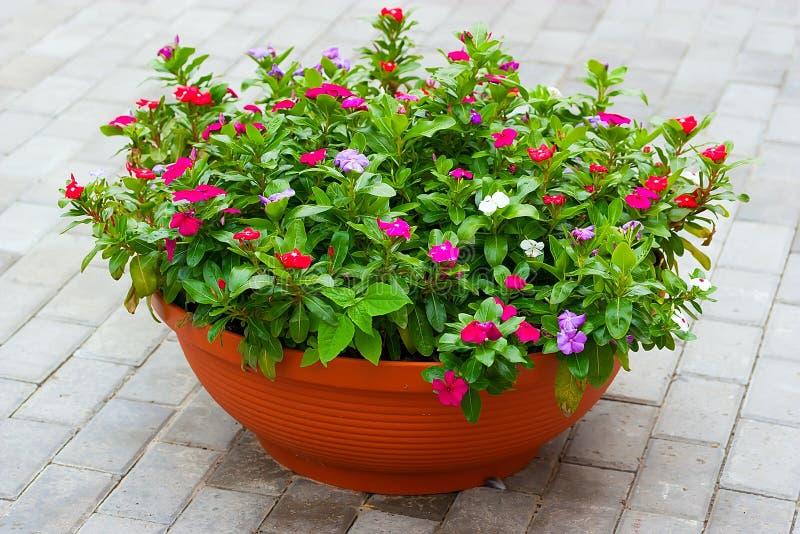 Blumen auf dem Patio stockbilder