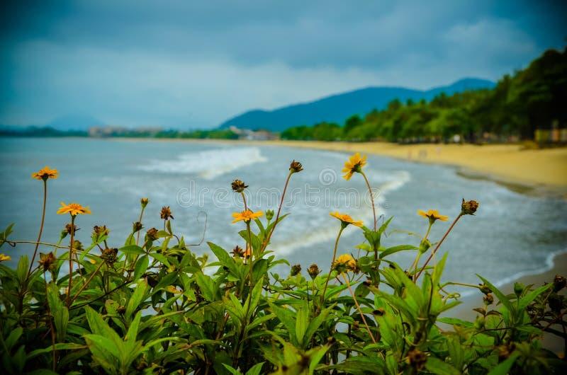 Blumen auf dem Strand lizenzfreies stockfoto