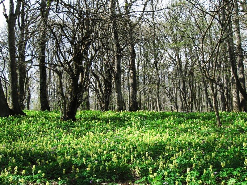 Blumen auf dem Wald lizenzfreie stockfotografie