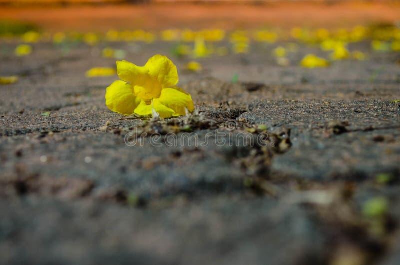 Blumen auf dem Weg lizenzfreie stockfotografie