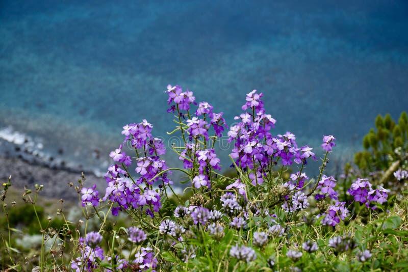Blumen auf der Klippe stockbild