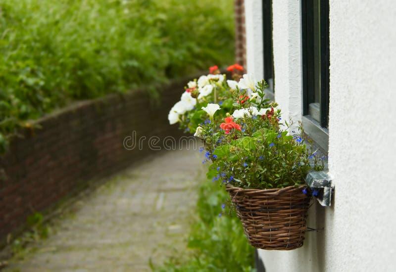 Download Blumen auf der Wand stockfoto. Bild von lebensstil, gras - 856318