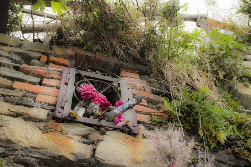 Blumen auf der Wand in Riomaggiore im La Spezia stockbild