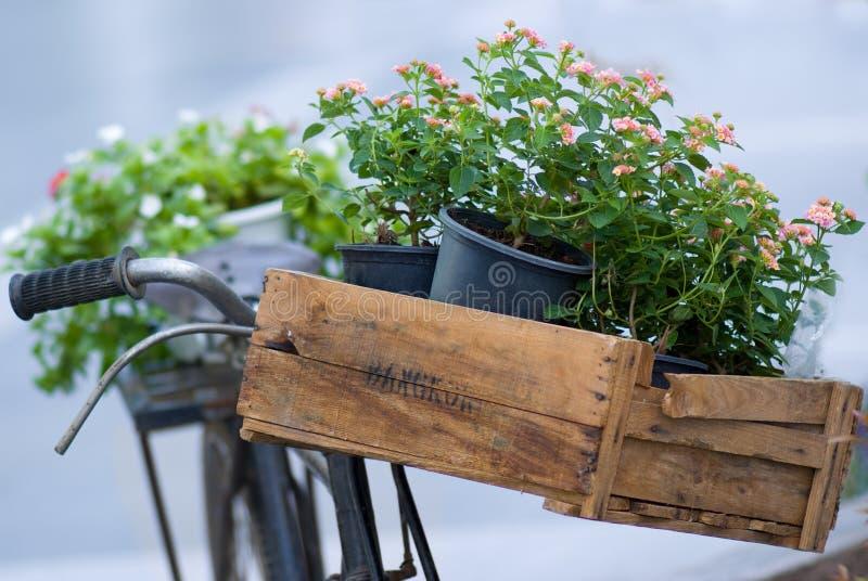 Blumen auf einem alten Fahrrad lizenzfreies stockfoto