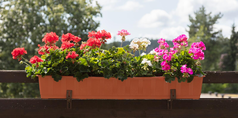 Blumen auf einem Balkon - selektiver Fokus lizenzfreie stockfotos