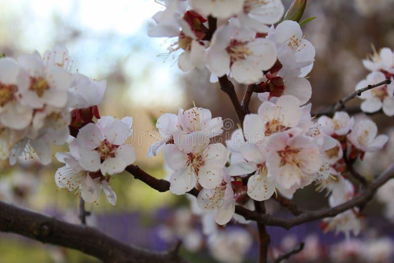 Blumen auf einem Baum stockfoto