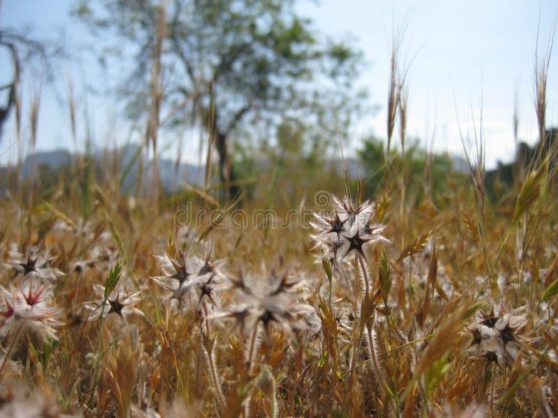 Blumen auf einer trockenen Wiese im Sommer lizenzfreies stockbild
