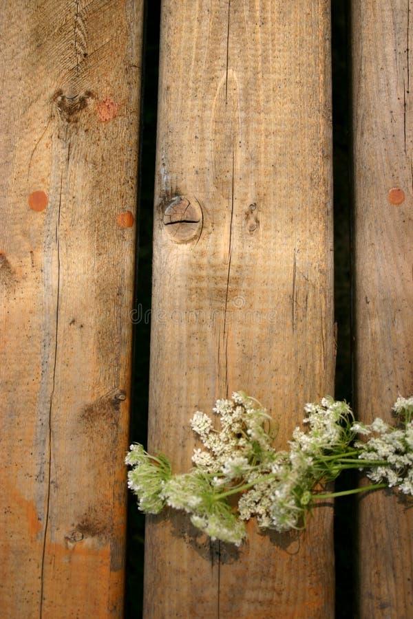 Blumen auf Holz lizenzfreies stockfoto