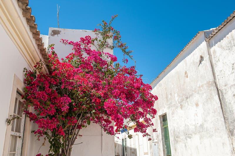 Blumen auf Straße, Faro Portugal lizenzfreies stockbild