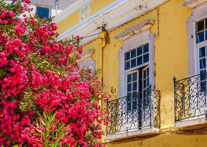 Blumen auf Straße, Faro, Portugal stockfotos