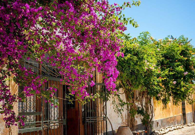 Blumen auf Straße, Faro, Portugal stockfoto