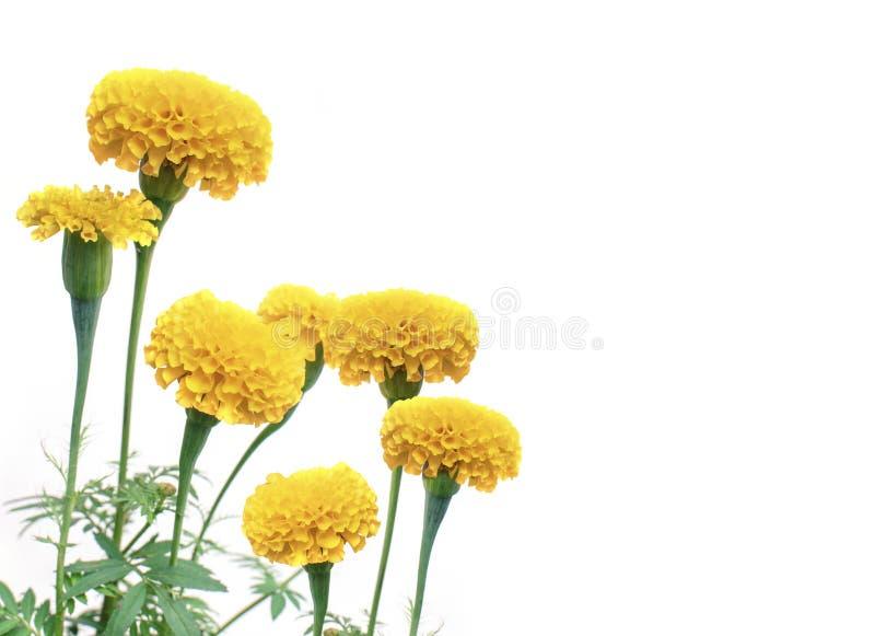 Blumen auf Weiß stockfotografie