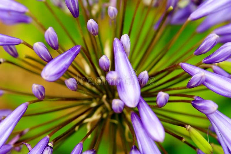 Blumen-Auszug lizenzfreies stockfoto