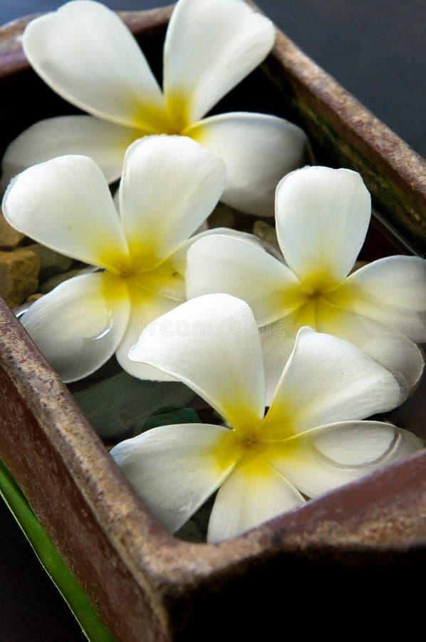 Blumen am Badekurortsalon stockfotografie