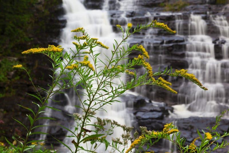 Blumen an Barberville-Fällen stockfotografie