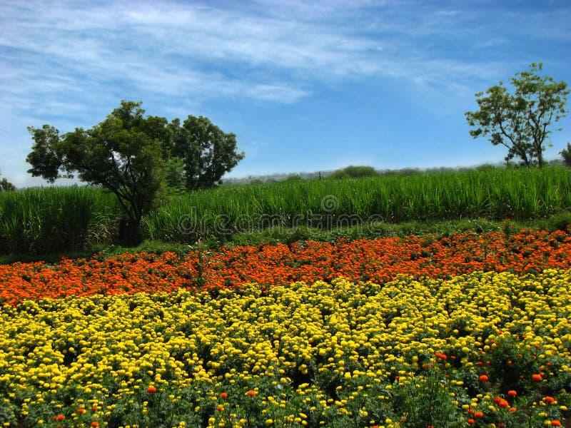 Blumen-Bauernhöfe lizenzfreies stockfoto