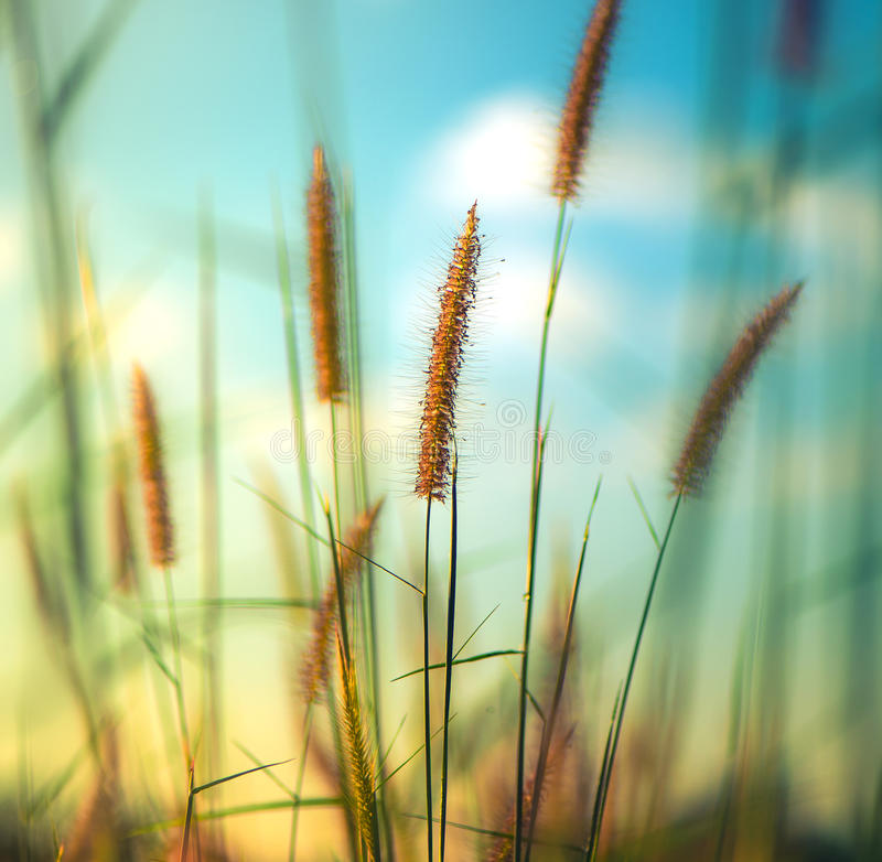 blumen bedecken im sommer mit gras stockbild bild von floral blau 86742655. Black Bedroom Furniture Sets. Home Design Ideas