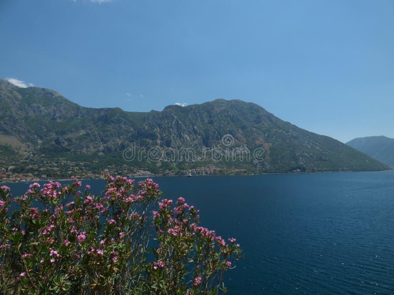 Blumen, Berge und Kotor-` s bellen Kotor-Stadt, Montenegro stockfotografie