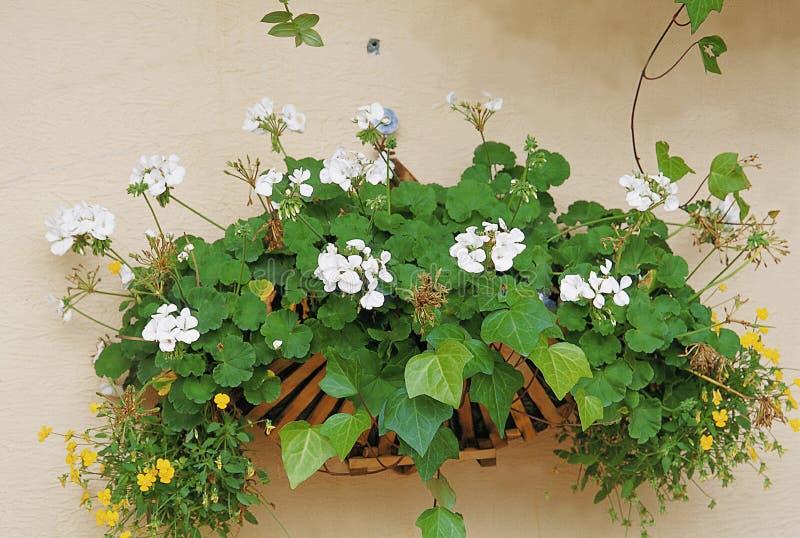 Blumen-Bild stockbilder