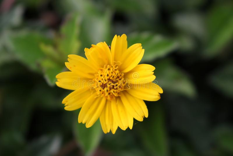 Blumen blühen der neue Tag stockfoto
