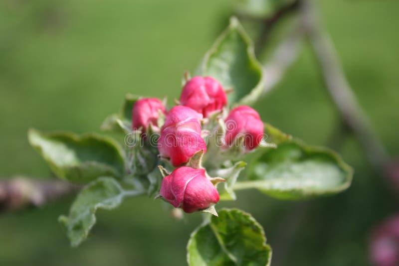 Blumen-Blüte auf Blatt lizenzfreie stockfotos