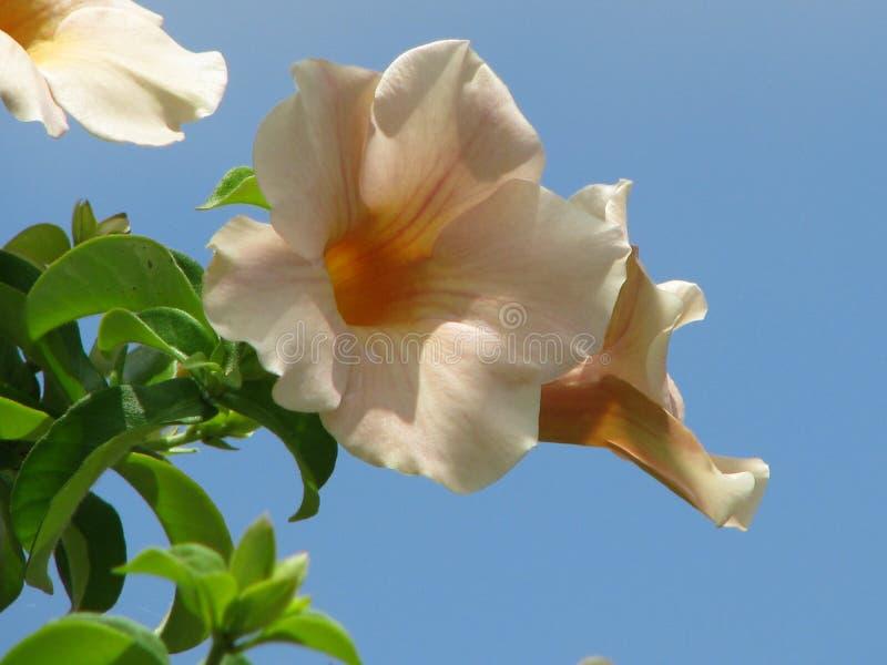 Blumen, Blüte, Natur stockbilder