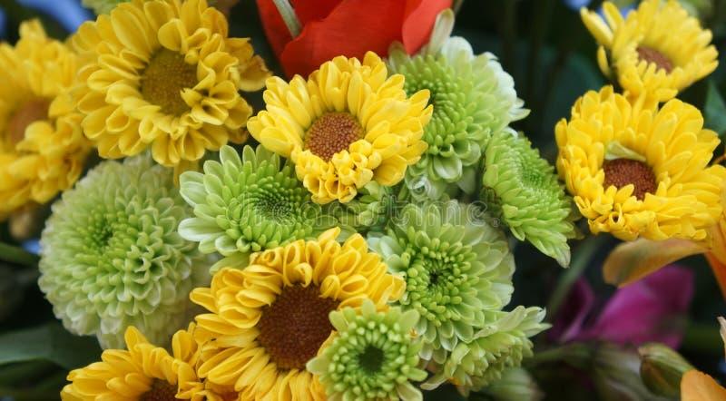 Blumen in den verschiedenen Farben stockbild