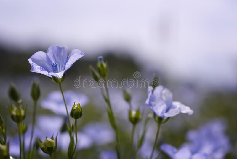 Blumen in der Brise stockfotografie