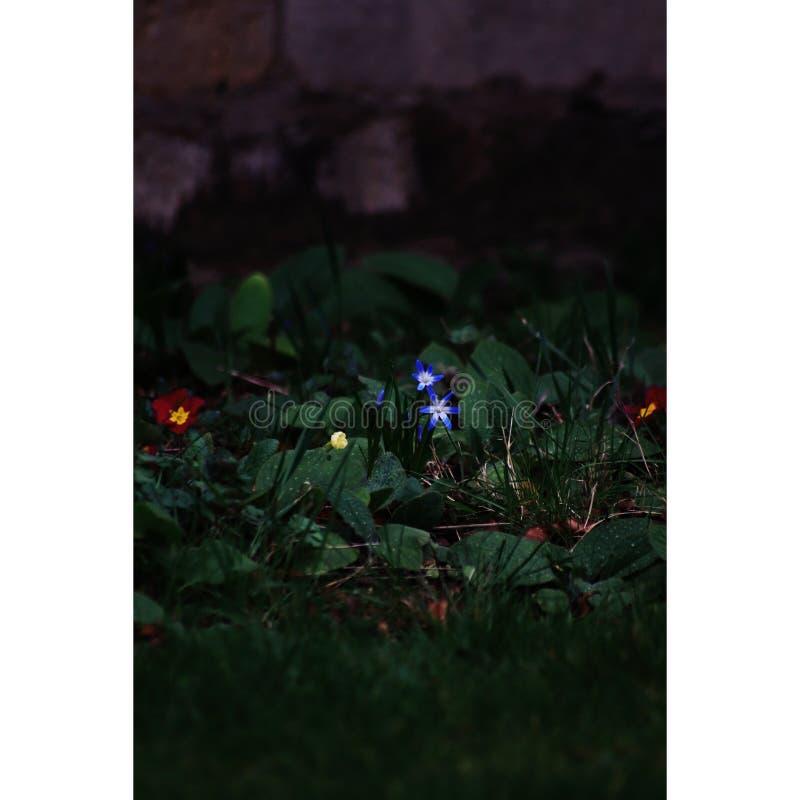 Blumen in der Dunkelheit lizenzfreie stockbilder