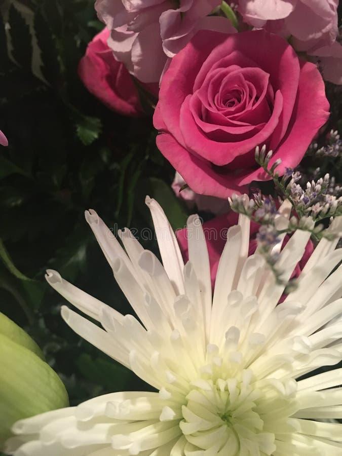 Blumen der Frühlings-Saison lizenzfreies stockbild